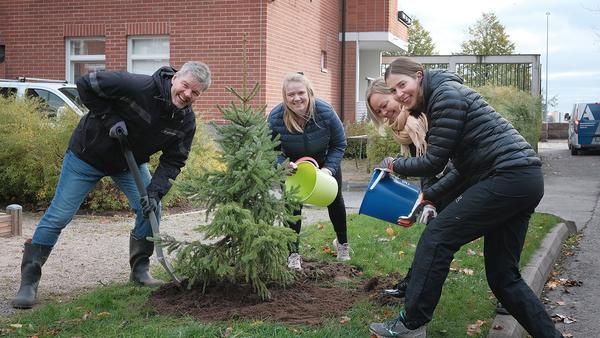Markku, Tiina, Riikka ja Sarianna istuttavat puuta Katajanokalla