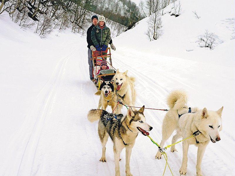 Chiens de tra neau avoriaz une aventure unique for Balade chien de traineau doubs