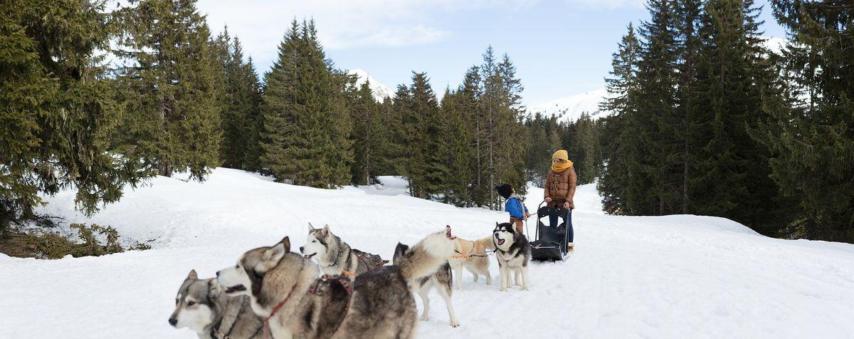 chien de traineau en Andorre