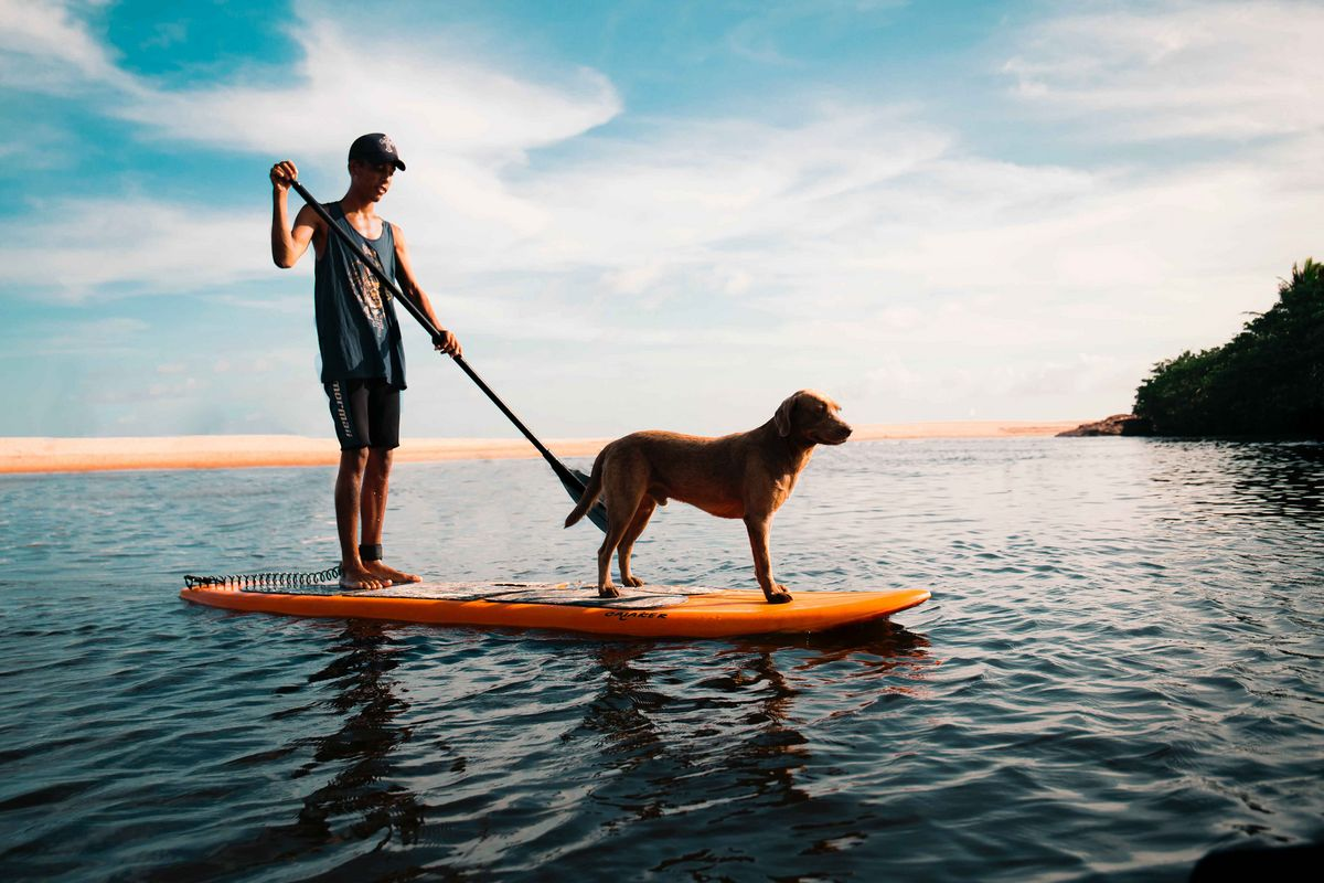Faire du paddle avec son chien