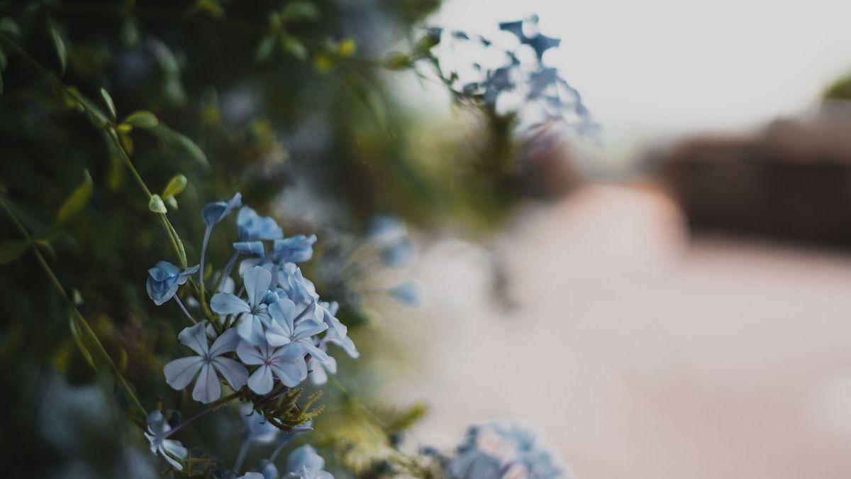 Fleurs de Saint-Tropez
