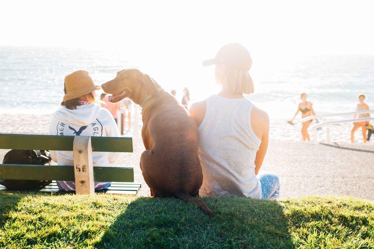 Aller à la plage avec son chien