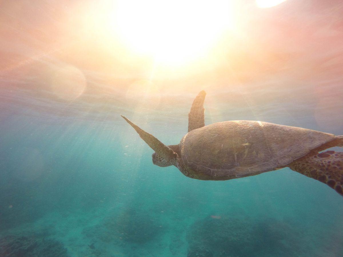 Activité snorkeling durant les vacances