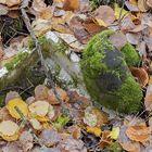 Sanotaan, ettei vierivä kivi sammaloidu. Tämä pallo lakkasi vierimästä ja näyttää sammaloituneen.