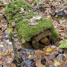 Superlonia ja sammalta. Vanha patja on maastoutunut lähes osaksi metsää.