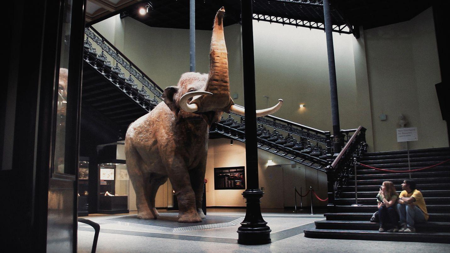 Luonnontieteellisissä museoissa on näytillä eläimiä, joita suuri osa ihmisistä ei näe koskaan luonnossa.