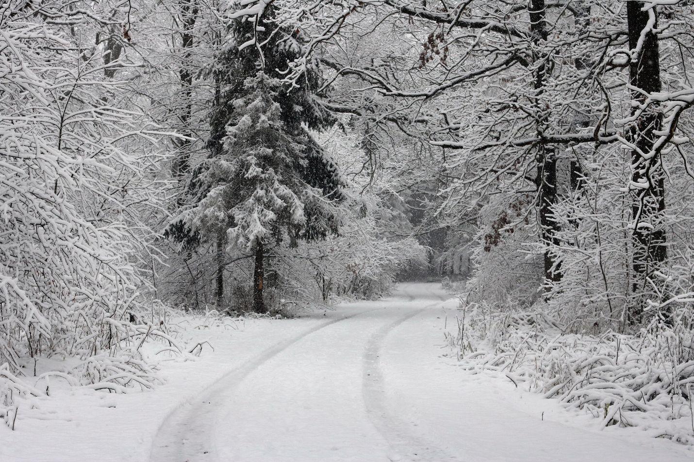 Uusi ennuste: talvi alkaa lauhana, mutta sitten iskee Siperian kylmyys