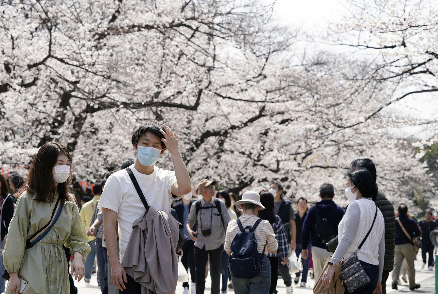 Lähes kaikki ovat käyttäneet hengityssuojaimia Japanissa koronavirusepidemian aikaan. Viime viikonloppuna tokiolaiset lähtivät puistoihin katsomaan kirsikankukkia.