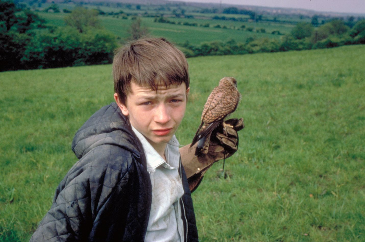Työläisperheen pojan Billyn (David Bradley) arki on karua ja yksinäistä, mutta hän löytää lohtua kesyttämästään haukasta.