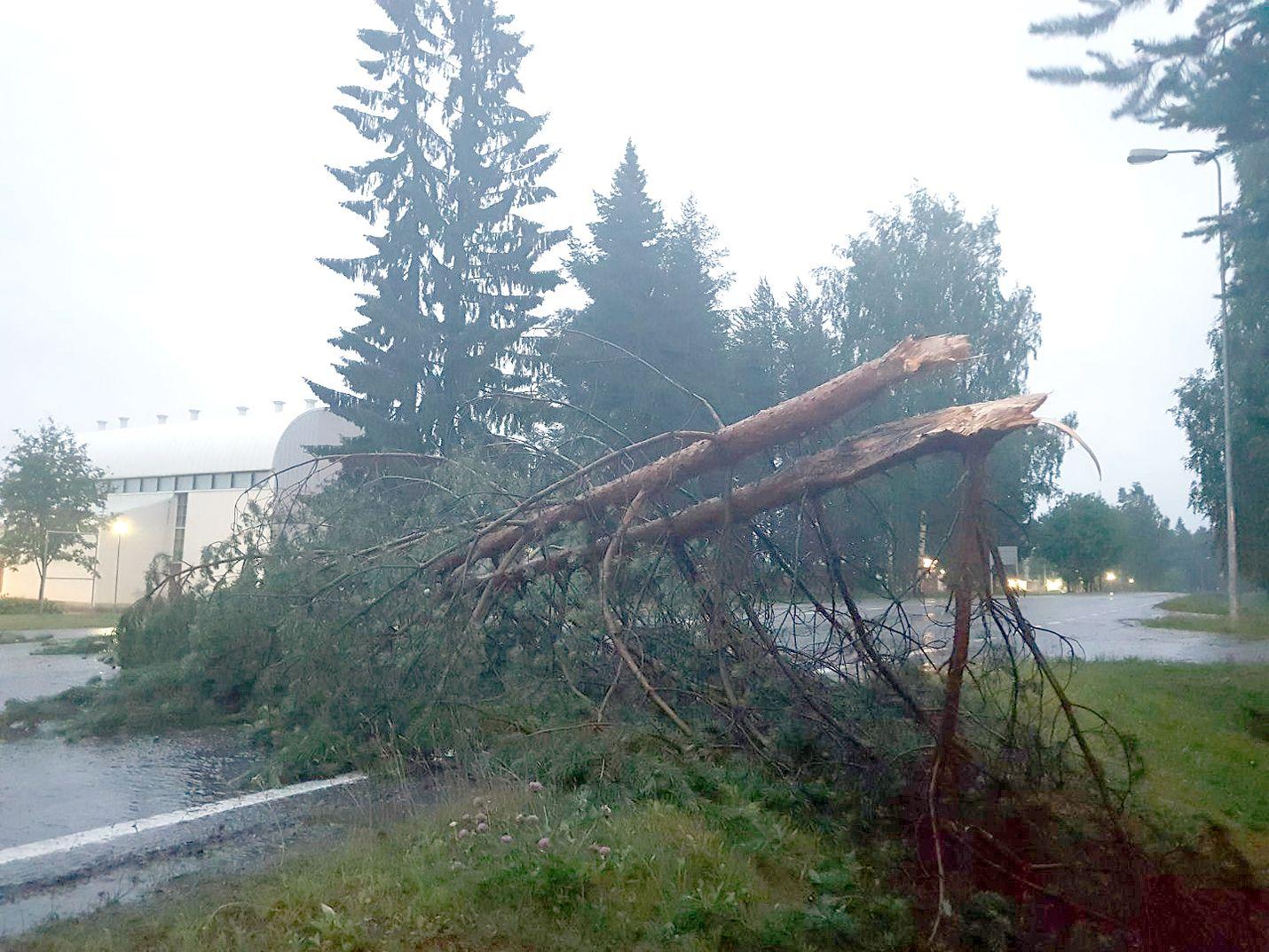 Kajaanissa Kainuussa Päivö-myrsky kaatoi puita tielle.