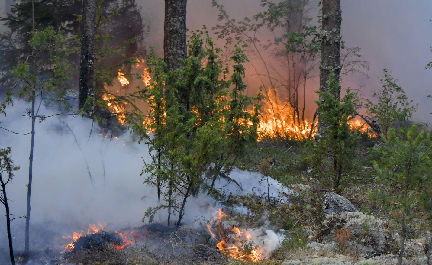 Pyhärannan Santtiolla metsää paloi heinäkuussa 2018.