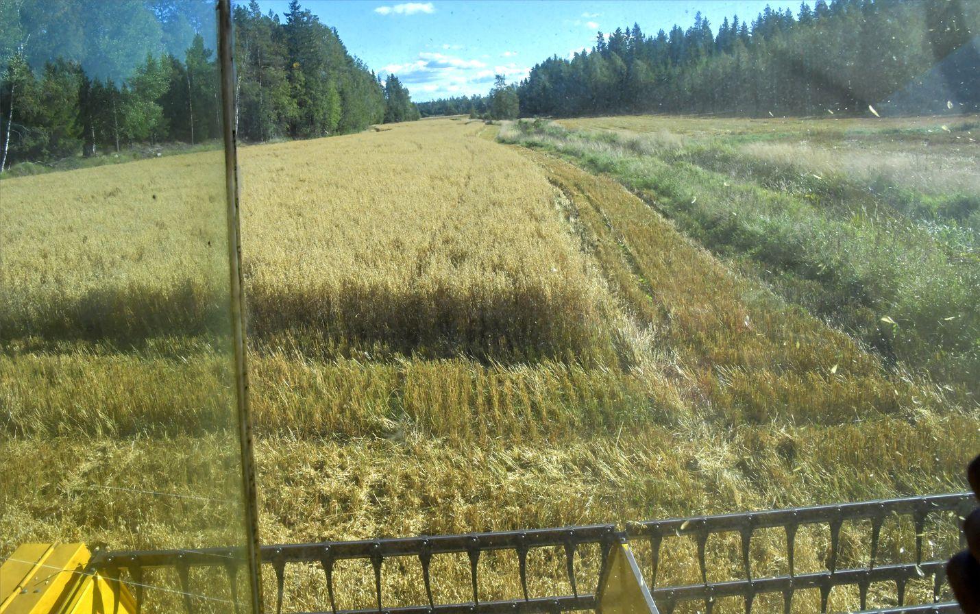 Kirjoittaja muistuttaa, että vastakkaisista luuloista huolimatta Suomen maataloudessa on tehty paljon ympäristönsuojelun eteen.