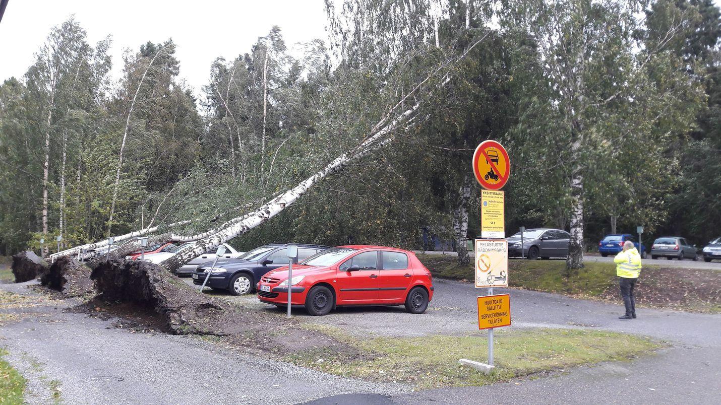 Kaatuneet puut uhkasivat parkkipaikan autoja Vaasassa torstaiaamuna.