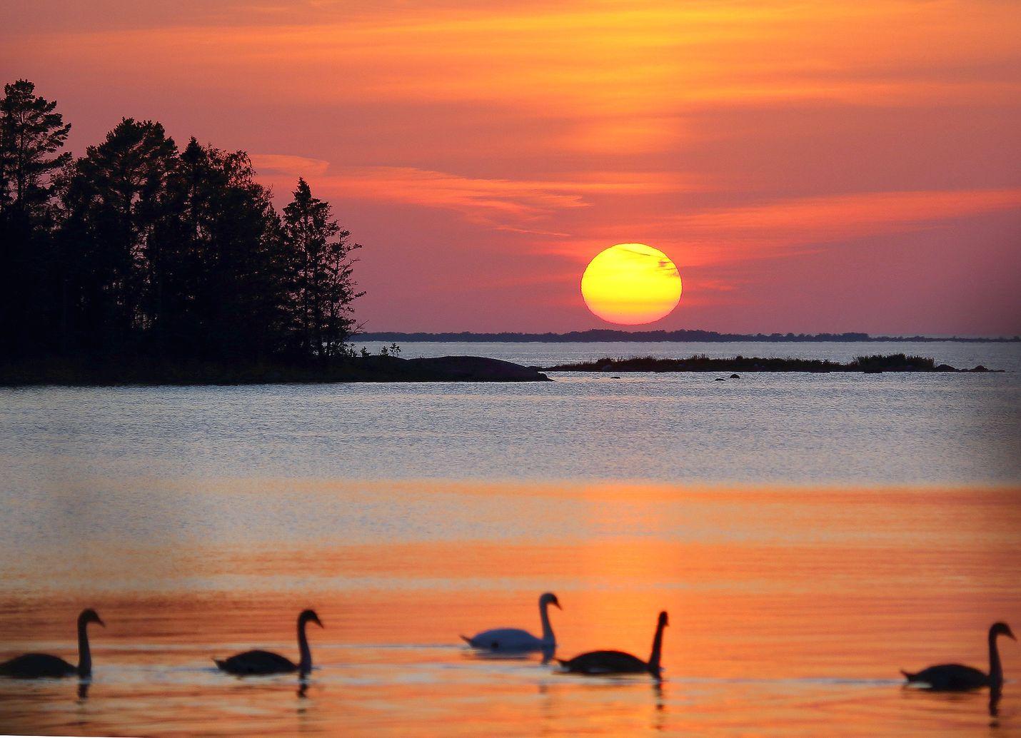 Sunnuntai oli poikkeuksellisen lämmin ja niin oli iltakin. Pyhämaassa aurinko laski melkein tyyneen mereen joutsenten seuratessa tilannetta, kertoo kuvan ottanut Erkki Railio.