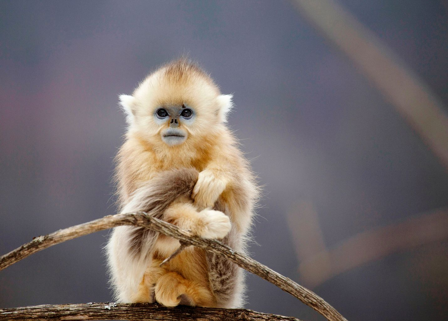 BBC:n näyttävässä sarjassa matkataan maanosasta toiseen ja tutustutaan niiden ainutlaatuisiin maisemiin, kasvillisuuteen, ilmastoon ja eläimiin. Aasia-jaksossa orpo lumiapinan poikanen koittaa selviytyä kylmyydessä Kiinan syrjäisissä vuoristometsissä.