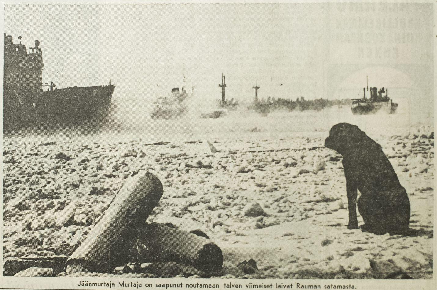Näin toimittiin ennen. Jäänmurtaja Murtaja saapui 14. helmikuuta 1966 noutamaan talven viimeiset laivat Rauman satamasta.