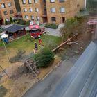 Myös tämä kuva on Karpalopolulta, jossa pelastuslaitos raivasi kaatunutta puuta.