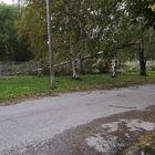 Puu kaatui Sinisaaren koira-aitaukseen.