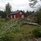Pyhärannan Nihtiössä puita oli kaatunut useampiakin. Kuva: Teuvo Salminen