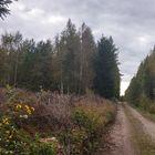 Lappi, Kivestö, entinen risujenjättöpaikka. KUVA: Tommi Helanteräs
