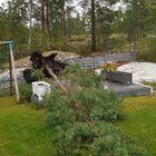 Kaatunut puu omakotitalon pihassa Silikalliolla. Kuva: Visa Virtanen
