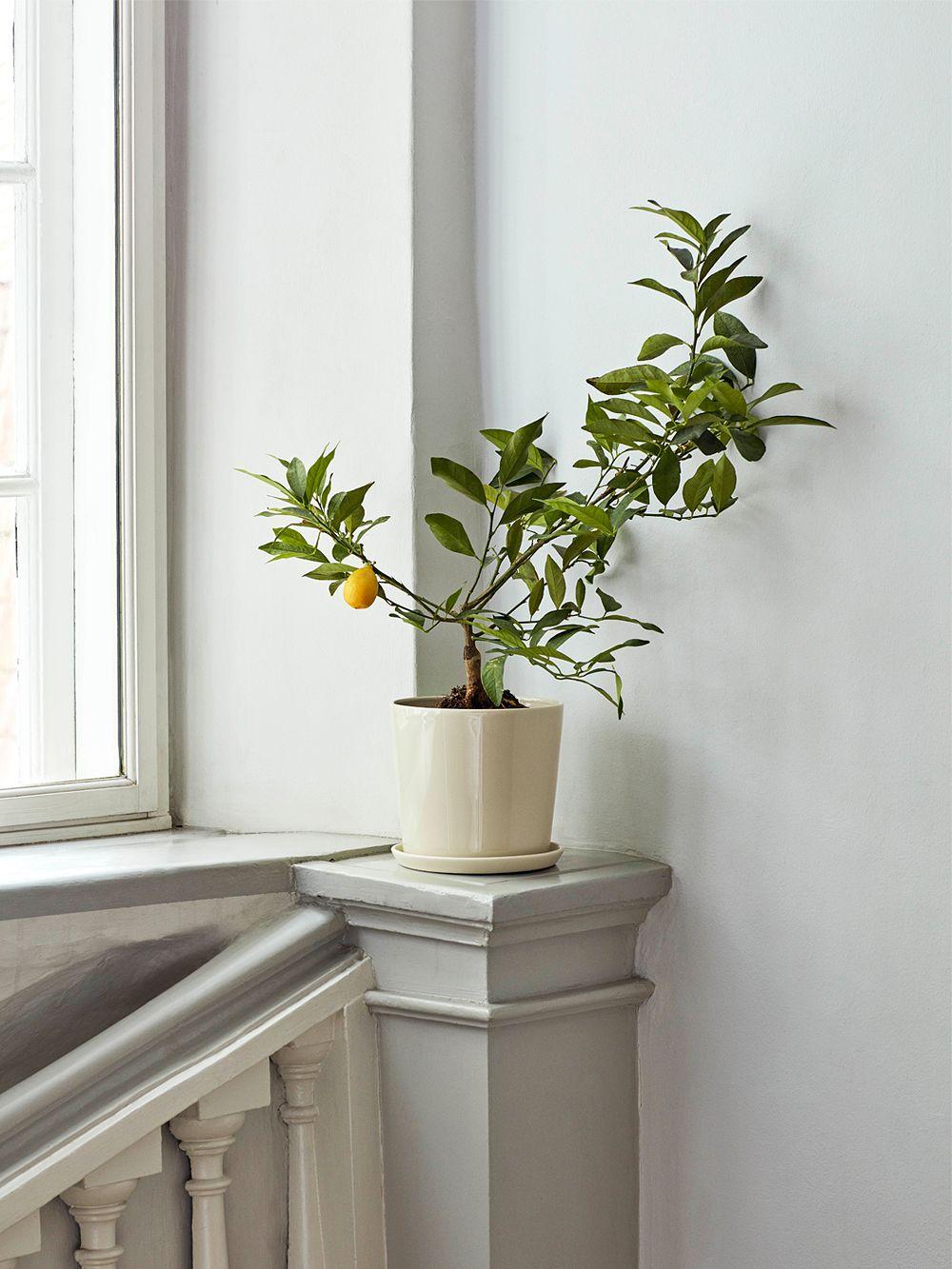 Hay Botanical Family -ruukku