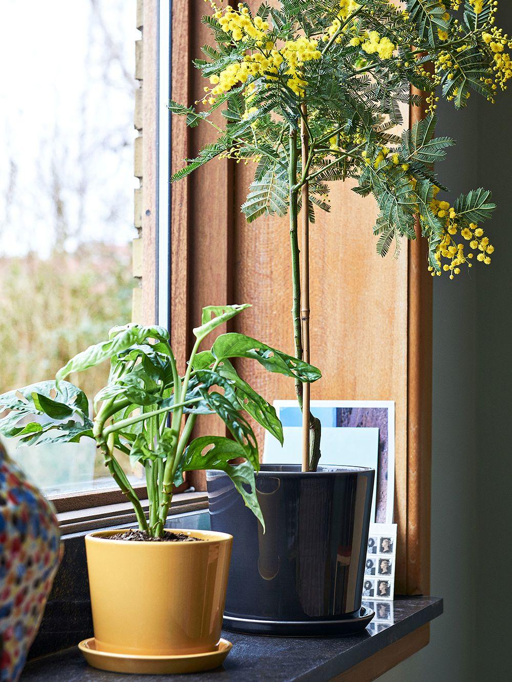 Hay Botanical-ruukku