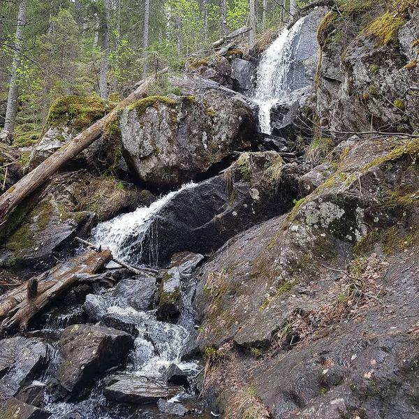 🔸Tarhapuro waterfall and its beautiful surroundings 🌲 ⠀ 🔸Tarhapuron vesiputous kauniissa ympäristössä 🌲 ⠀ 🔸Водопад Тархапуро в своём прекрасном окружении 🌲 ⠀ #showyourkoli #suomi #finland #tarhapuro #waterfall #woods #nationalpark #metsässä #kansallispuisto #vesiputous #koli #pohjoiskarjala #spring #kevät #коли #национальныйпарк #весна #водопад #влесу #тархапуро