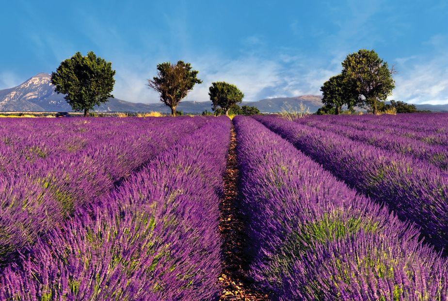 Provence pont royal vacances d'été