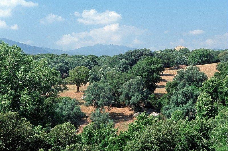 Le Sartenais - Corse