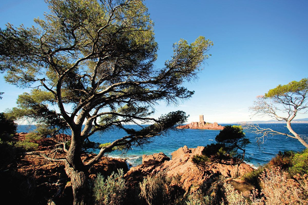 Lîle d'Or massif de l'Esterel
