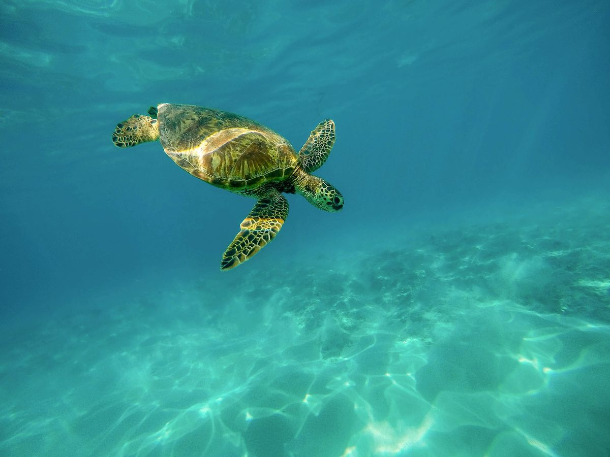 nager avec tortues tenerife