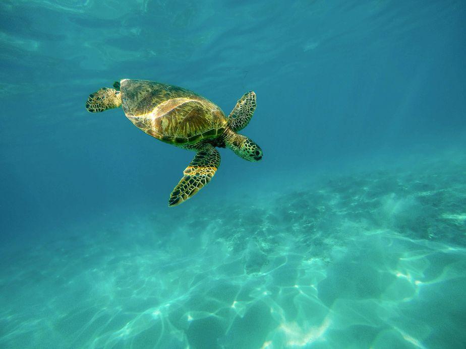 nager avec tortues tenerife
