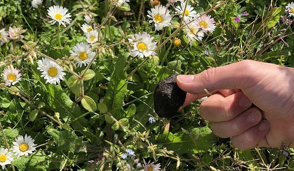 Center Parcs zu Hause: Blumenkugeln basteln