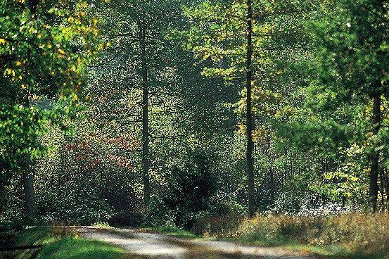 Der Wald wächst weiter