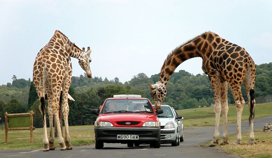 Safaripark Le Monde Sauvage