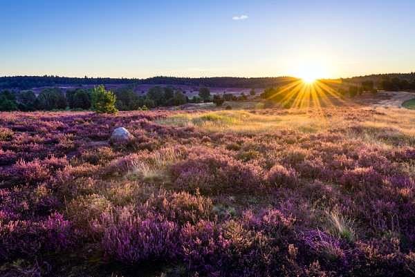 Eine echte Naturschönheit: die Lüneburger Heide