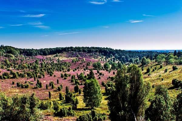 Bispinger Heide – die besten Ausflugsziele der Region