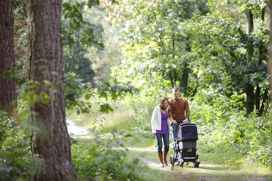 Schlafen kann Ihr Neugeborenes auch, während Sie durch einen ruhigen Wald wandern, herrlich!
