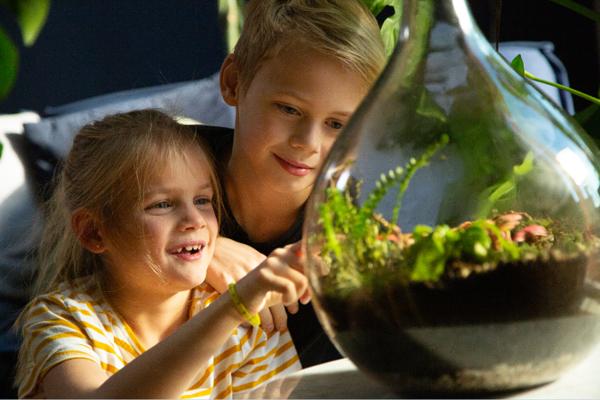 Erschaffen Sie Ihren eigenen Mini-Jungle Dome