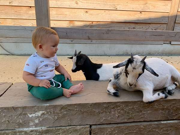 Benedikt bestaunt die Ziegen im Kinderbauernhof