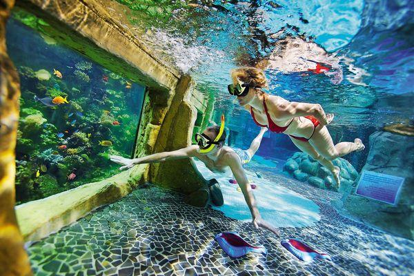 Meeresleben im Themen- und Schnorchelbad
