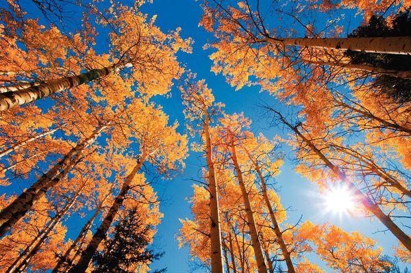 So könnte Ihr Herbstbild aussehen