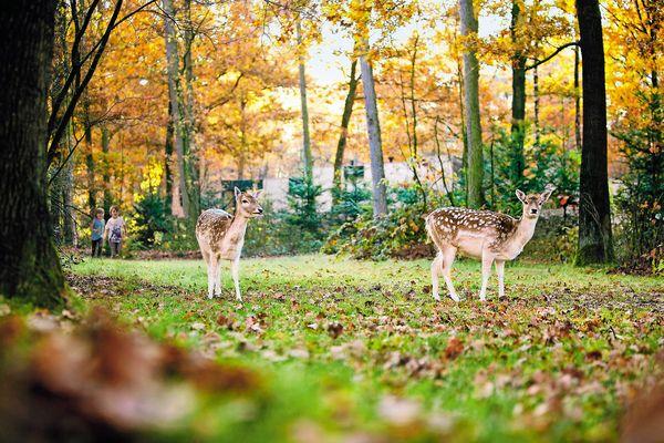 Ein wunderschönes Herbstbild in kräftigen Farben