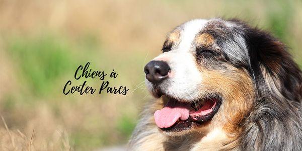 Les chiens à Center Parcs