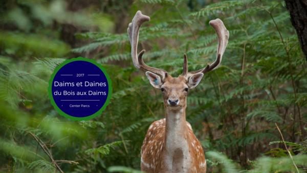 Les nouvelles des Daims & Daines