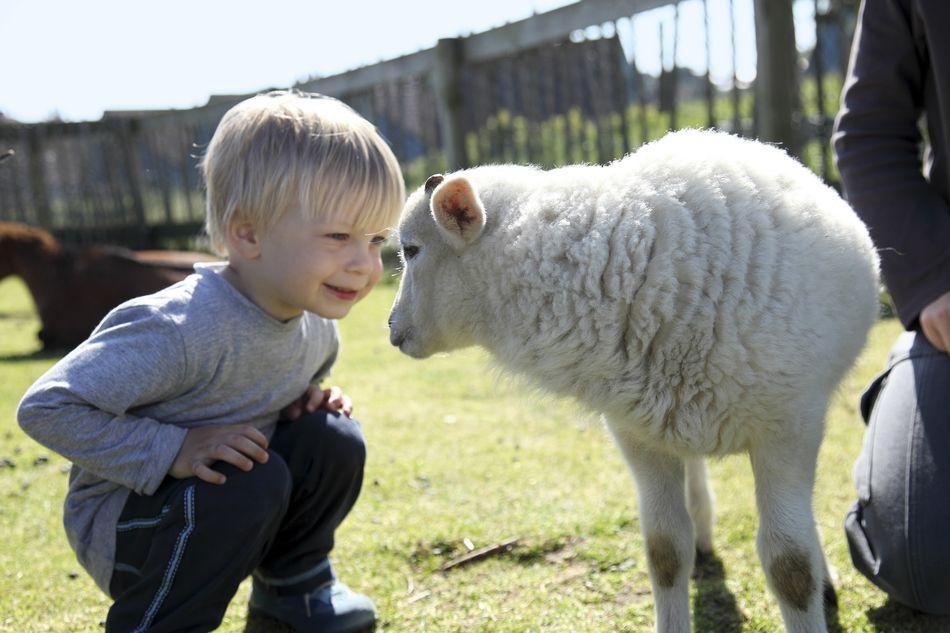 enfants-moutons-animaux