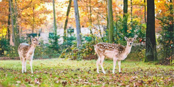 Un automne à Center Parcs
