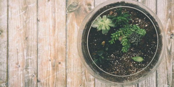Découvrez comment créer votre terrarium