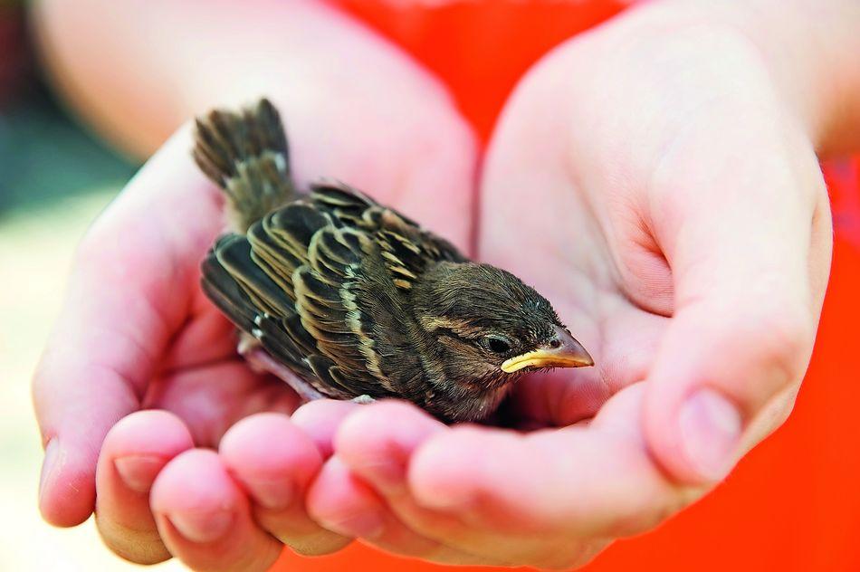 oiseaux-protection